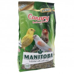 Manitoba Canary Best...